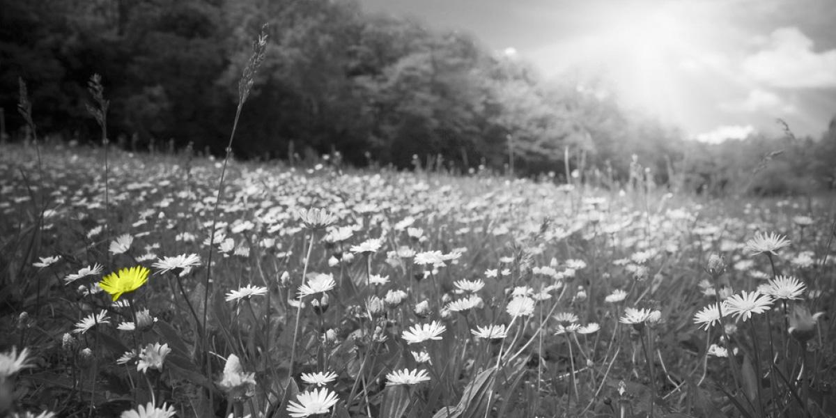 Grass-Roots-Ecology-surveys-hero-images-V2-3
